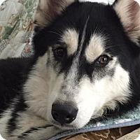 Adopt A Pet :: Max - Elkhart, IN