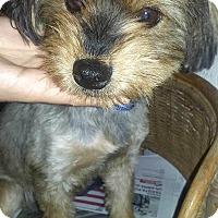 Adopt A Pet :: Gabriel - Boulder, CO