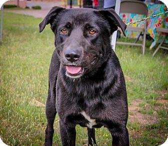 Labrador Retriever Mix Dog for adoption in Gilmer, Texas - Rocky