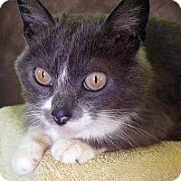 Adopt A Pet :: Hazel - New Castle, PA