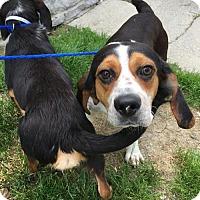 Adopt A Pet :: George (5/16) - Cincinnati, OH
