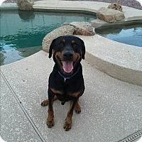 Adopt A Pet :: Jasper - Gilbert, AZ