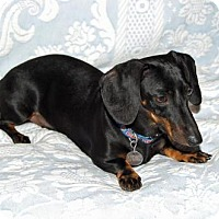 Adopt A Pet :: Shelby number 2 in TN - Columbia, TN