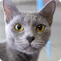 Adopt A Pet :: Sofi - Winston-Salem, NC
