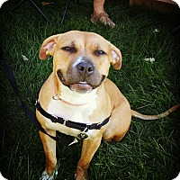 Adopt A Pet :: Brandi - Vernon Hills, IL
