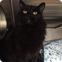 Adopt A Pet :: Moe Moe - Chico, CA