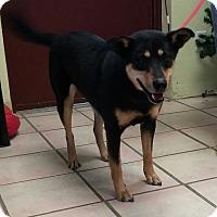 Adopt A Pet :: Reba - Newburgh, IN
