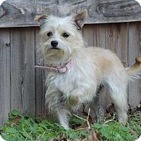 Adopt A Pet :: Lela - Joplin, MO