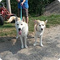 Adopt A Pet :: Zeus - Cavan, ON