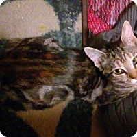 Adopt A Pet :: Tiffany - Whitestone, NY