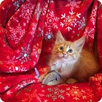 Adopt A Pet :: Kris - Butner, NC
