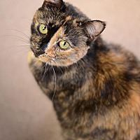 Adopt A Pet :: Angelica 10144 - Atlanta, GA