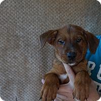 Adopt A Pet :: Jet - Oviedo, FL