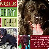 Adopt A Pet :: Quentin - Johnson City, TX