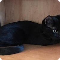 Adopt A Pet :: Stella (teenage female) - Harrisburg, PA