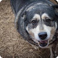 Adopt A Pet :: Natasha - Kingston, TN