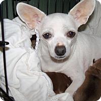 Adopt A Pet :: Sissy - Apache Junction, AZ