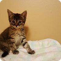 Adopt A Pet :: Totum - Minneapolis, MN