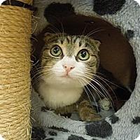 Adopt A Pet :: Zelia - Medina, OH