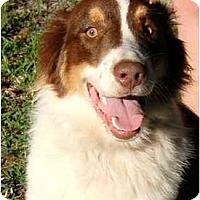 Adopt A Pet :: Ben - Orlando, FL