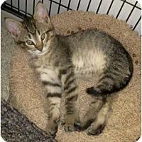 Adopt A Pet :: Sam and Dean - Dallas, TX