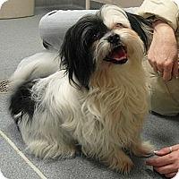 Adopt A Pet :: Lil Miss - Hamilton, ON