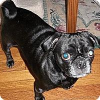Adopt A Pet :: Ivy - Hinckley, MN