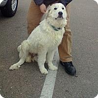 Adopt A Pet :: Lila - Orange Cove, CA