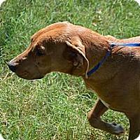 Adopt A Pet :: Hailey - Marshfield, MA