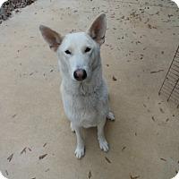 Adopt A Pet :: Brigitte - Ozark, AL