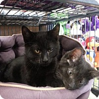 Adopt A Pet :: Charcoal - Caistor Centre, ON