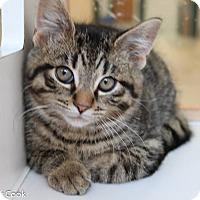 Adopt A Pet :: Maxim - Ann Arbor, MI