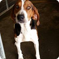 Adopt A Pet :: Lincoln - Lewisburg, TN