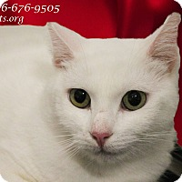 Adopt A Pet :: Super SUGAR - Monrovia, CA