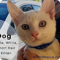 Adopt A Pet :: Dog - Temecula, CA