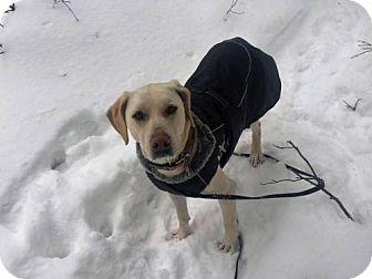 Black Mouth Cur Dog for adoption in Aurora, Colorado - Lola