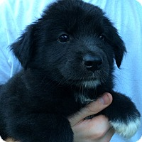 Adopt A Pet :: Winnie - Kittery, ME