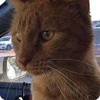 Adopt A Pet :: Wilbur - Mansfield, TX