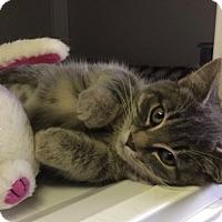 Adopt A Pet :: Trinket - White Cloud, MI