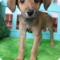 Adopt A Pet :: Lange - Staunton, VA