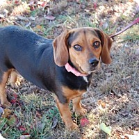Adopt A Pet :: Reagan - Winder, GA