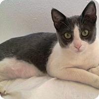 Adopt A Pet :: Bella - Orange, CA