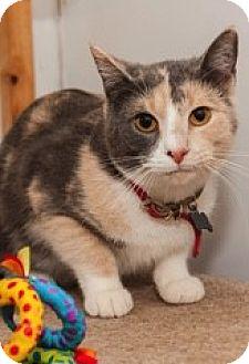 Calico Cat for adoption in Baltimore, Maryland - Amanda