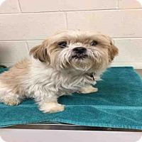 Adopt A Pet :: MARCO - Upper Marlboro, MD