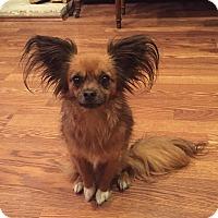 Adopt A Pet :: Gizmo-ADOPT Me! - Redondo Beach, CA