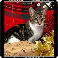 Adopt A Pet :: Clarice - Waldorf, MD