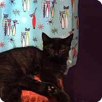Adopt A Pet :: Mortimer - Glendale, AZ