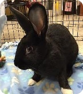New Zealand Mix for adoption in Woburn, Massachusetts - Poco