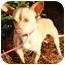 Photo 3 - Chihuahua/Dachshund Mix Dog for adoption in Atlanta, Georgia - Enrique