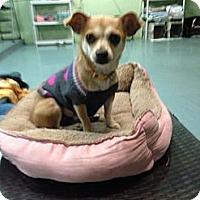 Adopt A Pet :: Mamacita - Brooksville, FL